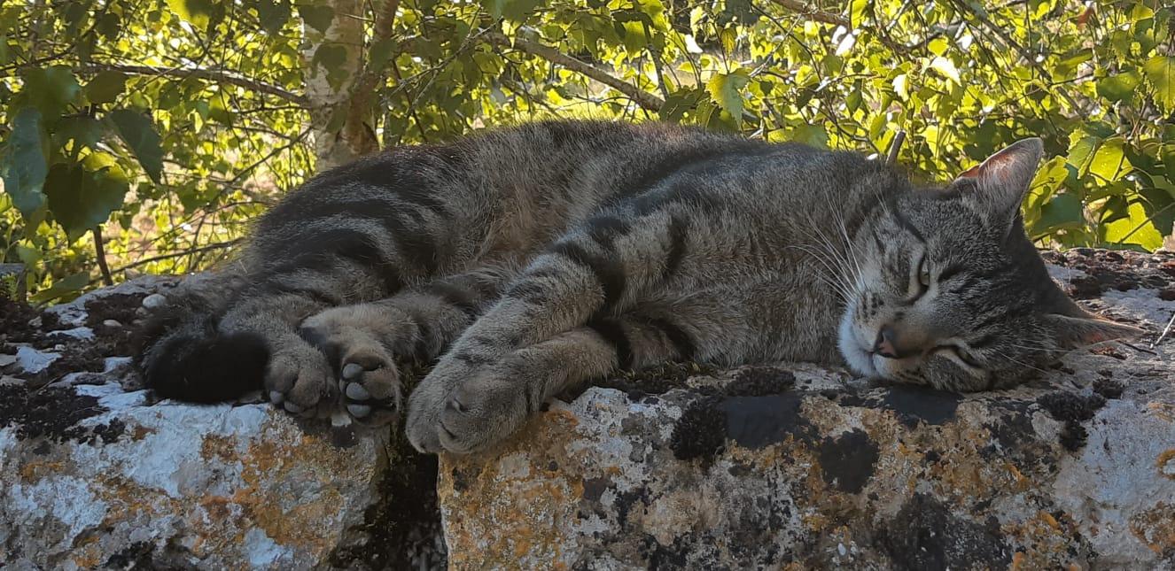 chat au chateau
